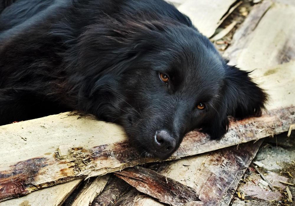 Foto: Kosobu/Shutterstock.com